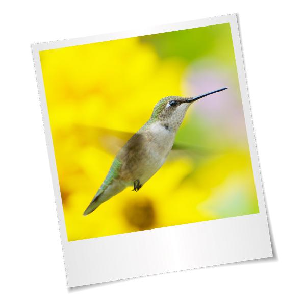 externalisation-communication-colibri